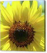 Sun Flower Glow Art Print Summer Sunflowers Baslee Troutman Canvas Print