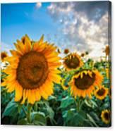 Sun Flower Glow Canvas Print