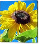 Sun Flower - Id 16235-142743-3974 Canvas Print