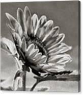 Sun Flower - Id 16235-142753-8673 Canvas Print