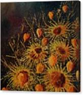 Sun Flowers And Physialis  Canvas Print