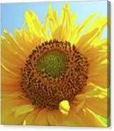 Sun Flowers Art Sunflower Giclee Prints Baslee Troutman  Canvas Print