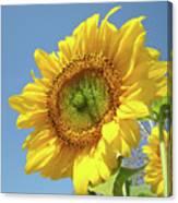 Sun Flowers Garden Art Prints Baslee Troutman Canvas Print