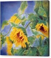 Sun Flowers No.3 Canvas Print