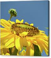Sun Flowers Summer Sunny Day 8 Blue Skies Giclee Art Prints Baslee Troutman Canvas Print
