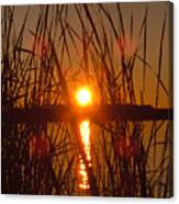 Sun In Reeds Canvas Print
