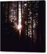 Sun In The Forest  Canvas Print