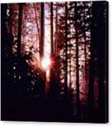 Sun In The Forest Two  Canvas Print