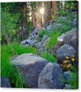 Sun In The Sequoias Canvas Print