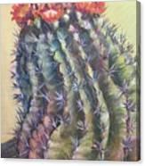 Sun Kissed Barrel Cactus Canvas Print