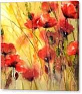 Sun Kissed Poppies Canvas Print