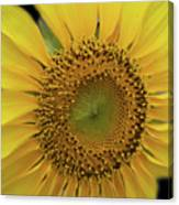 Sun Of Flowers Canvas Print