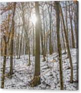 Sun Peaking Through The Trees - Fairmount Park Canvas Print