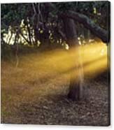 Sun Rays 2 Canvas Print