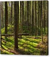 Sun Rays In Forest Canvas Print