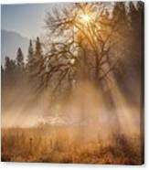 Sun Rays In Yosemite Ground Fog Canvas Print