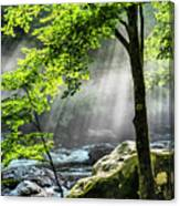 Sun Rays On Williams River  Canvas Print