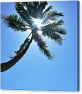 Sun Rays Through A Tall Palm Tree Canvas Print