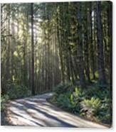 Sun Rays Through The Forest Canvas Print