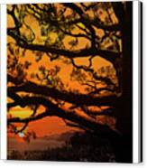 Sun Set At Rancho Palos Verdes, Cali Canvas Print