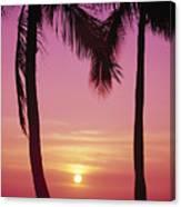 Sun Sets Between Pams Canvas Print