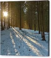 Sun Setting On Winter Woods Canvas Print