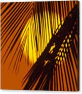 Sun Shining Through Palms Canvas Print