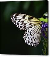 Sun Shining Through The Wings Of A Rice Paper Butterfly Canvas Print