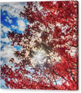 Sun Sky Clouds And A Red Maple Canvas Print