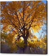 Sun Through Golden Leaves Canvas Print