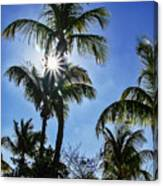 Sun Through Smathers Beach Palms Canvas Print