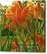 Sun Through The Tiger Lily Canvas Print