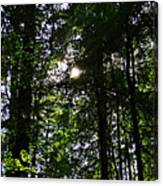 Sun Through Trees In Forest Canvas Print
