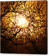 Sun Tree Canvas Print