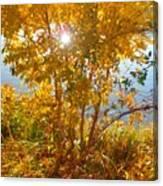Sun Warmth Canvas Print