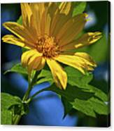 Sun Yellow Canvas Print