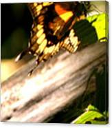 Sunbathing Butterfly Canvas Print