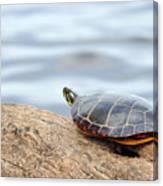 Sunbathing Turtle Canvas Print