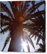Sunbeams Through The Palms Canvas Print