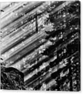 Sunbeams Through The Pines - Mount Rainier Canvas Print