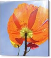 Sunburned Canvas Print