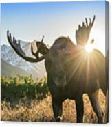 Sunburst In The Antlers Canvas Print