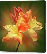 Sunburst Orange Azalea Canvas Print