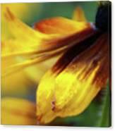 Sunburst Petals - 2 Canvas Print