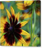 Sunburst Petals Canvas Print