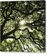 Sunburst Through Tree Canvas Print