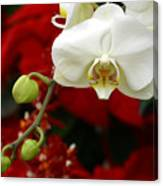 Sunday Afternoon Orchid Canvas Print