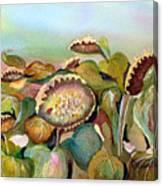Sundown Flowers Canvas Print
