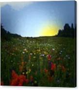 Sundown Wildflower Meadow Canvas Print