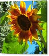 Sunflower 101 Canvas Print